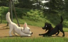 Photo of bolt playing with other dog for fans of Disney's Bolt.