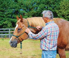Certified Horsemanship Video: Fitting a Rope Halter on a Horse