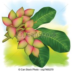 Pistachio tree branch with fruits and leaves. Vector - stock illustration, royalty free illustrations, stock clip art icon, stock clipart icons, logo, line art, EPS picture, pictures, graphic, graphics, drawing, drawings, vector image, artwork, EPS vector art