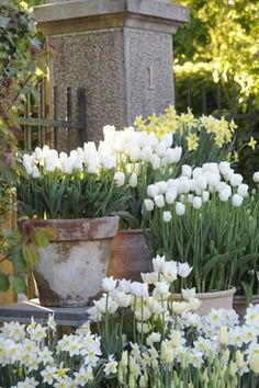 Garden containers - 50 Stunning Spring Garden Ideas for Front Yard and Backyard Landscaping – Garden containers White Tulips, White Flowers, Spring Flowers, Spring Blooms, Draw Flowers, Spring Plants, Rose Flowers, Garden Cottage, Garden Pots