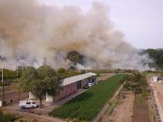 Arden dos hectáreas de cañar en el cauce del rio Palancia, muy próximo al polideportivo de Geldo