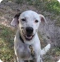 12/28/16 -Pointer Mix Dog for adoption in Rockport, Texas - Cash