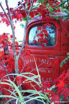 Old truck, autumn... Gordon Skagit Farms, Skagit Valley, WA