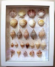 Sea Shell Shadow Box: From shells collected at Sanibel Island Florida / Dorothy Reinhardt Designs Seashell Display, Seashell Art, Seashell Crafts, Beach Crafts, Beach Shadow Boxes, Seashell Shadow Boxes, Diy Shadow Box, Sanibel Island Shells, Sea Shells