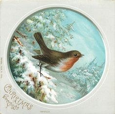 robin on a snowy branch facing right