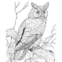 Diurnal Coloring Pages
