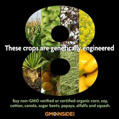 Alfalfa, Canola, Corn, Cotton, Papaya, Soy, Sugar Beets and Summer Squash make up the 8 crops that are genetically engineered in the U.S. If a product contains these ingredients and it is not labeled non-GMO Verified or Certified Organic, there is a good chance it contains GMOs. Please share this post to raise the awareness of GMO usage. For more facts on GMOs please visit us here and sign up to be a GMO Insider: http://gmoinside.org/faqs