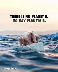 UN Secretary General #AntónioGuterres warns that: If we do not change the direction between now and 2020, we run the risk of crossing the threshold at which we can avoid unbridled climate change. There would be disastrous consequences for human beings and all the natural systems that sustain us. THERE IS NO PLANET B.  📸 Ebenism  #thereisnoplanetB #nohayplanetaB #BeaShamanGood #SavethePlanet #HopeforTomorrow