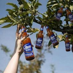 Do you think I can grow one if I plants the caps ? Party Drinks, Fun Drinks, Beer Humor, Beer Funny, Fun Funny, Funny Stuff, Blended Drinks, Beer 101, Cheer Party