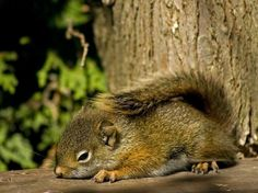 Squirrel and charm.