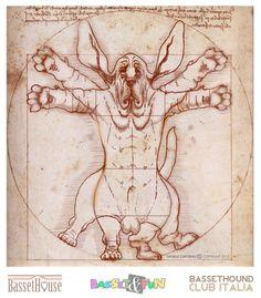 Il genio di Leonardo Da Vinci basò i suoi studi sul modello del Basset Vitruviano celebre rappresentazione dell' equilibrio del corpo del basset che viene perfettamente inscritto nelle due forme geometriche più pure: il cerchio ed il quadrato.  Poi, solo in un secondo tempo, fu perfezionato e applicato all'uomo nella tavola che tutti conosciamo.   Questa è la storia...