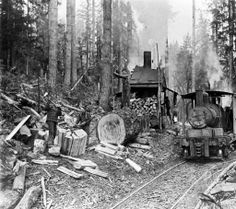 Class A Climax Quilcene :: North Olympic Heritage Logging Equipment, Forest Pictures, History Photos, Ford Trucks, Historical Photos, Locomotive, American History, Old School, Olympics