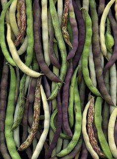 "Fresh beans — variously known as green beans, snap beans, and string beans — come in a wide range of shapes and colors. The ""green"" in fresh green beans refers to their immature state at harvest, not their color, according to Earthbound Organic Farms. They can vary in hue from pale to deep #green, from yellow to purple, and from mottled cream to russet."