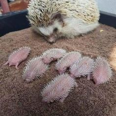 17 Animal Moms Being Proud Of Their baby animals #funny #picture
