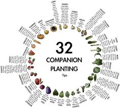 Companion Planting - A Complete Guide To Planting Different Crops Together For Shared Benefits