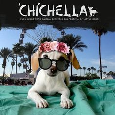 CHIchella is fun for everyone - especially the dogs that get adopted!
