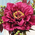 Alan Dunn's Oriental Trails Bouquet