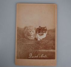 Cabinet-Card-Photo-QUIRK-CATS-60082