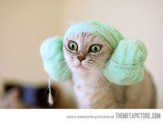 help me, Obi Wan...