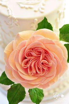 david austin rose, I am amazed at the middle petals.