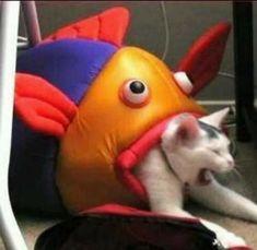 Funny Animal Jokes, Cute Funny Animals, Funny Animal Pictures, Animal Memes, Cute Baby Animals, Cute Cats, Funny Disney Pictures, Really Funny Memes, Stupid Funny Memes