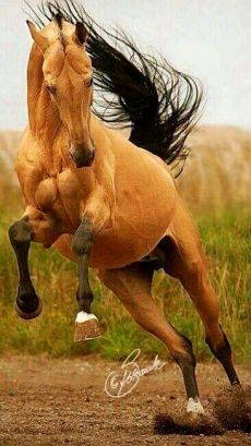 The musculature on this horses face is amazing and kinda weird. Most Beautiful Animals, Beautiful Horses, Beautiful Creatures, Majestic Horse, Majestic Animals, Horse Photos, Horse Pictures, Action Pictures, All The Pretty Horses