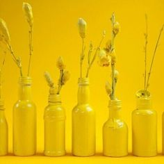 Yellow flowers and bottles Yellow Theme, Yellow Art, Yellow Walls, Mellow Yellow, Color Yellow, Lemon Yellow, Orange Yellow, Mustard Yellow, Yellow Photography