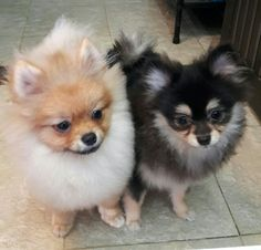 ❤Peipei&Paopao❤ Pet 1, Owl Pet, Dog Cat, Animals Kissing, Baby Animals, Cute Animals, Cute Puppies, Dogs And Puppies, Cute Dogs