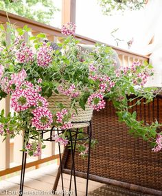 How to decorate with container plants with Four Generations One Roof