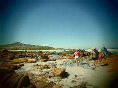 Coastal Foraging course dates – Summer Rock Pools, Seaweed, Cape Town, Summer 2014, Monument Valley, Coastal, Beach, Water, Travel