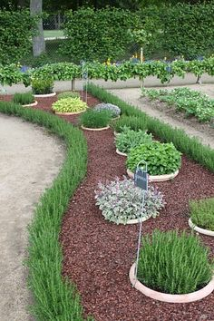 Cool herb garden idea, burried pots surrounded by mulch. Would also work for any perennial!