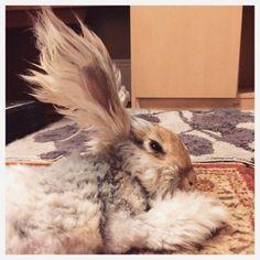 Meet Wally the Angora Bunny He's definitely the Hairstyle Inspiration 2015. Photos by ©wally_and_mollyCats, Beavers & Ducks