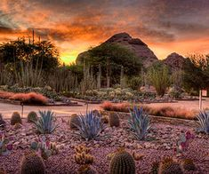 Select an Appropriate Mulch Gravel is a common weed-reducing mulch material in desert gardens because it doesn't hold moisture, which could cause some types of cacti and succulents to rot.