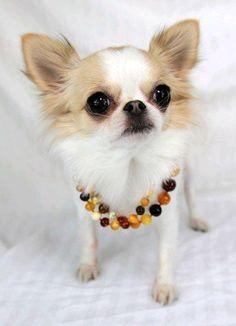 33 besten A Dog\'s Jewelry Wish Bilder auf Pinterest | Hundehalskette ...