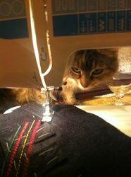 cat sews