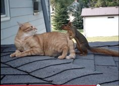 Cat and squirrel playing Watch video here