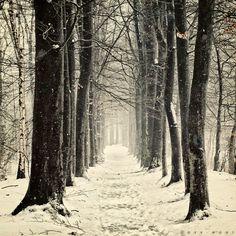 Winter Mantra by Oer-Wout.deviantart.com on @DeviantArt