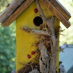 How to Build a Bird House, tells you the size of the hole for different birds. Just Imagine - Daily Dose of Creativity Bird House Plans, Bird House Kits, Bird Houses Diy, Fairy Houses, Home Building Tips, Bird Aviary, Bird Boxes, Kit Homes, Mellow Yellow