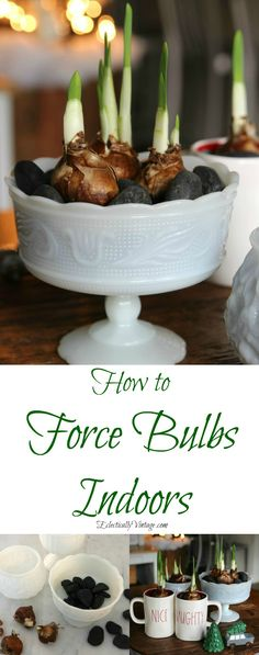 How to force bulbs indoors - perfect for Christmas and this centerpiece using different containers is gorgeous! eclecticallyvintage.com