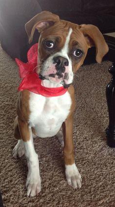 Boxer baby Ethel