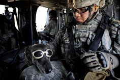 Dogs have been fighting alongside U.S. soldiers for more than 100 years...such a great article!