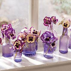 perfect windowsill garden Purple Vase, Purple Flowers, Purple Petunias, Flower Colors, Glass Flowers, Faux Flowers, Purple Yellow, Bright Yellow, Calla Lilies