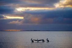 Pelikane bei Sonnenuntergang - Lake Albert Caravan Park - South Australia