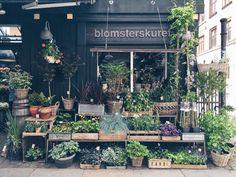 Lojas em Copenhague para quem ama plantas