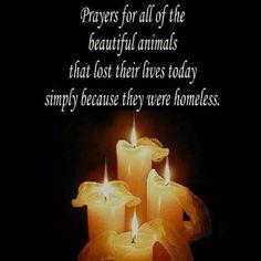 prayer for animals | Prayers | Advocating for Animals