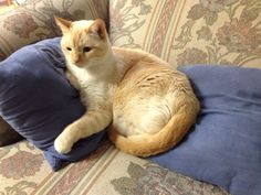 Tenshi kitty