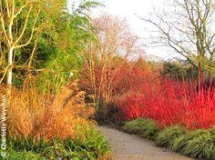 The Galloping Gardener: Winter wonderland at Sir Harold Hillier's garden!