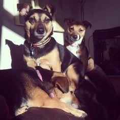 #puppies Benji, Millie and Rosie