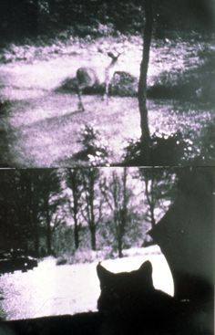 """""""The Cat Is My Medium"""": Notes on the Writing and Art of Carolee Schneemann 