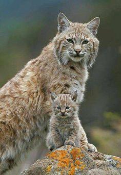 Wildlife at its best...